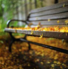 Cool fall photo.