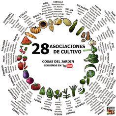 Cómo es la asociación de cultivos (3 trucos y entenderéis todo) | Plantas