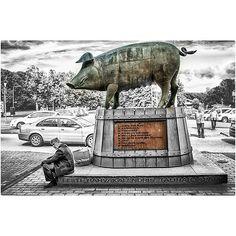 Untitled Moose Art, Instagram Posts, Animals, Egg As Food, Animales, Animaux, Animais, Animal