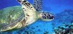 Proyecto Nacional de las Tortugas Marinas - Gandoca
