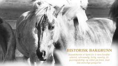 Stall Engelstad tilbyr et bredt utvalg av kurs for islandshest. Se vår aktivitetskalender for påmelding.