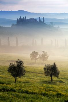 Morning Mist, Tuscany, Italy