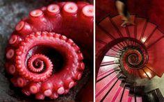 La espiral en la naturaleza y en la arquitectura
