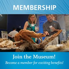 The Florida Museum of Natural History 3215 Hull Road, Gainesville, FL 32611 Monday -Saturday 10am-5pm, Sundays 1pm-5pm  www.bosshardtrealty.com #BosshardtRealty #GainesvilleFL  @Bosshardt