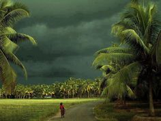 Monsoon in Kerela, India
