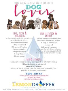 Essential Oil Recipes for Dogs: Treat fleas and ticks, mosquitoes, skin issues, anxiety, and arthritis and more- also click through to read how to get rid of stinky pet odors using Young Living Essential Oils!