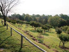 @pallen_smith 's #Historic Travels #MiddletonPlace #Charleston #SouthCarolina