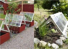 idées-déco-jardin-vieilles-fenêtres-serres-citronier-plantes idées déco jardin