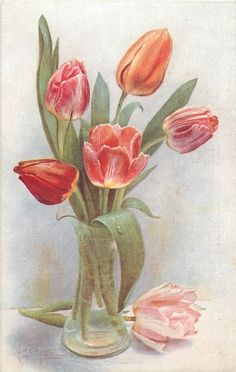 Pink, red, & orange tulips in clear glass vase ~ 1918