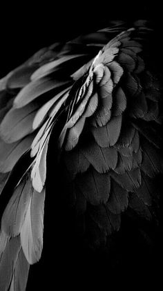 Find images and videos about black, aesthetic and angel on We Heart It - the app to get lost in what you love. Statue Ange, Yennefer Of Vengerberg, Rhysand, Crows Ravens, Black Wings, Angels And Demons, Black Swan, Black White, Black And White Photography