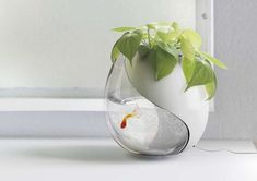 Plant-Growing Aquariums - A Planter and Fish Bowl in One For Green Thumbs and Fish Lovers
