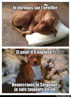 Really funny dog memes Animal Humour, Funny Animal Jokes, Funny Dog Memes, Crazy Funny Memes, Cute Memes, Really Funny Memes, Funny Animal Videos, Cute Funny Animals, Cute Baby Animals