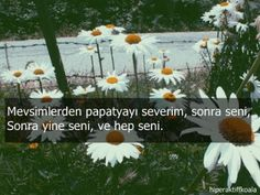 Karma, Profile, Love, Words, Flowers, Quotes, Plants, Photography, Google