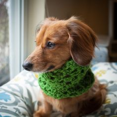 FREE SHIPPING Puppy Scarf- Dog scarf, cowl, dachshund scarf, cowl, small dog scarf, cowl on Etsy, $16.00