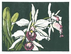 William Seltzer Rice, King Orchid - Brazil, 1925, color woodcut