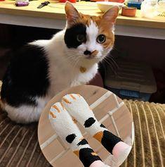 Winter Cat Claws Cute Thick Warm Sleep Floor Socks – Fashion Love Island