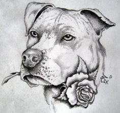 A collection of great coloring pages * There are lots of coloring sheets all over the web. Tatouage Pit Bull, Animal Paintings, Animal Drawings, Pitbull Drawing, Cool Coloring Pages, Free Coloring, Coloring Books, Girl Drawing Sketches, Drawing Expressions
