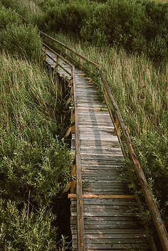 Swamp Bridge by Errne
