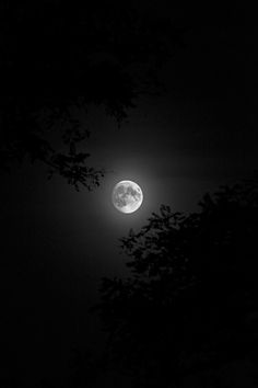 camera-raw: artsinmyheart: The moon in black and white for seriously edited friday - Outstanding Moonlight Photography, Moon Photography, Sky Aesthetic, Aesthetic Photo, Aesthetic Makeup, Black Aesthetic Wallpaper, Aesthetic Wallpapers, You Are My Moon, The Moon