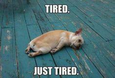 tired-meme_0.jpg (600×414)