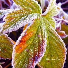 Frost gets down and it is a cold morning. in JAPAN.  ゜・:,。★\(*'v`*)♪merryXmas♪(*'v`*)/★,。・:・゜