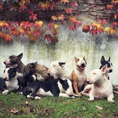 What a lovely group photo! (I want the fawn bullie... Gimme!)