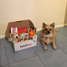 fetchbox: the best quality dog toys, dog treats and accessories for well-loved pups. Have your say and contribute to the well-being of Australian dogs! Pomeranians, Chihuahuas, Better Love, Dog Treats, Dog Toys, Instagram Feed, Pup, Thankful, Packing