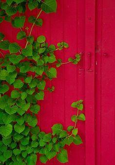 Színpaletta: fű, fa, virág | OtthonKommandó