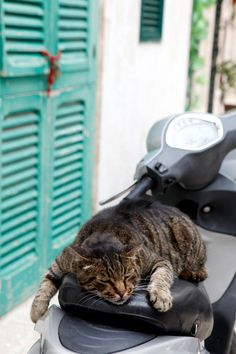 One exhausted Italian kitty cat! Puglia – A Day At The Sea