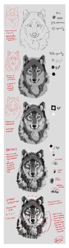 Wolf Portrait Mini-Tutorial by Junryou-na-Kokoro on deviantART
