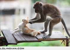 Cat fighting with monkey-Monkey VS Cat-Top 10 Funny Videos 2016 - monkey. Funny Baby Images, Funny Pictures For Kids, Funny Animal Pictures, Funny Animals, Animals Images, Funny Cat Compilation, Funny Dog Videos, Compilation Videos, Funny Babies