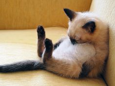 18 Cats That Love To Relax in Very Weird Positions