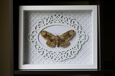 Rare Owl Moth by TheButterflyBabe on Etsy