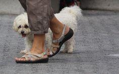 Como Montar uma Empresa de Adestramento de Cães Projeto Layout Lista de Fornecedores e Equipamentos Disponibilizamos consultas e consultoria. Confira: Saiba mais: www.engetecno.com.br http://www.engetecno.com.br/port/proj.php?projeto=empresa-para-servicos-de-adestramento-de-cachorros-20-adestradores