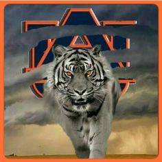 Here comes The Tigers !!!!