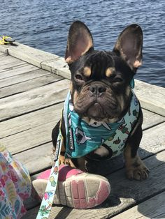 French Bulldog with Heart Dog Heavyweight Canvas Messenger Shoulder Bag