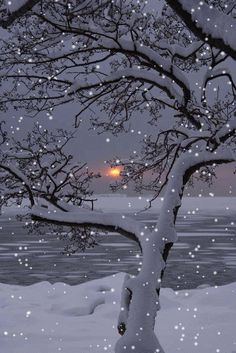 15 trendy tree black and white art winter wonderland Winter Sunset, Winter Love, Winter Scenery, Winter Snow, Christmas Scenes, Christmas Art, Winter Christmas, Holiday, Winter Pictures