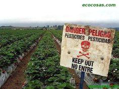 Es necesaria la agricultura industrial? - Ecocosas
