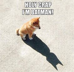 Unless you can be batman. Then be [BATMAN] Cute Animal Memes, Funny Animal Quotes, Animal Jokes, Funny Animal Pictures, Cute Funny Animals, Funny Cute, Hilarious Pictures, Funny Animal Sayings, Animal Funnies