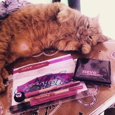 This is #paradise! Tag #PetsLoveNeve to be featured.  #cosmetics #makeup #cute #love #belleza #vegan #nature #animal #cat #beauty #makeuplovers #makeupjunkie #makeupaddict #italy #england #scotland #ireland #sweet #london #cats #instabeauty #lovely #zoella #sweden #finland #maquillaje #spain #nevecosmetics