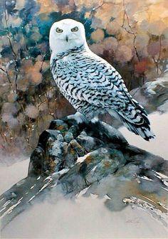Watercolor snowy owl.