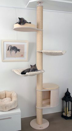Deckenspanner Modell Luisa Deckenspanner Modell Luisa Profeline Shop profeline Cat Trees Kratzbaum Deckenspanner Modell Luisa von Profeline in der Holzfarbe Weiss mit nbsp hellip ideas for pets Cat Gym, Diy Cat Tree, Carpet Cover, Cat Towers, Cat Shelves, Cat Playground, Cat Climbing, Cat Condo, Pet Furniture