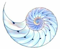 Nautilus watercolor with this palette