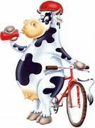 oh la belle vache!