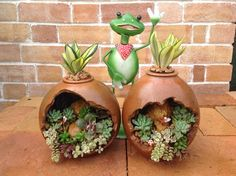 Creative succulent container by Shell Jhanb