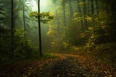 30 Awe-Inspiring Examples of Mist Photography Scenery Photography, Landscape Photography, Image Fun, Autumn Scenery, Fall Pictures, Wild Nature, Nature Wallpaper, Fall Wallpaper, Beautiful Artwork
