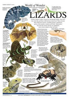 Lizards, Reptiles, Gila Monster, Funny Animals, Cute Animals, Todays Comics, Pond Life, Info Graphics, School Worksheets
