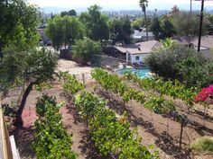 Small Backyard Vineyard 14 best backyard vineyard for winemaking images on pinterest