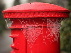 7 wonderful frozen spider webs #nature #photography