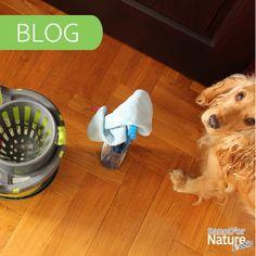 A kutyák rengeteg törődést és odafigyelést igényelnek, de azt tudtad, hogy már tudományosan is bizonyított, hogy tartásuk számos előnnyel is jár a mi életünkben? Többek között jó hatással han az egészségünkre is! ❤️ Sosem küzdöttünk ennyire nagy erőkkel a mikroorganizmusok ellen, mint most az új koronavírus megjelenése kapcsán. A túlzott fertőtlenítéssel azonban rengeteget ártunk! Hogy jönnek ide a kutyák?🤔 Ezt a témát jártuk most kicsit körbe, új cikkünkben ➡️ Dog Bowls, Mint, Nature, Naturaleza, Nature Illustration, Off Grid, Peppermint, Natural